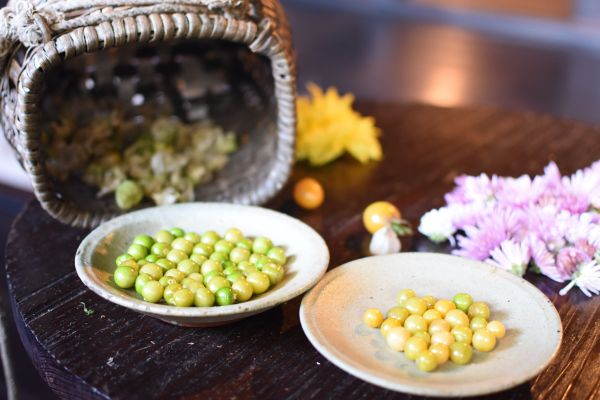 充さんの畑で摘んだホオズキ。青い実(左)は日光に当てておくと黄色く熟れるという