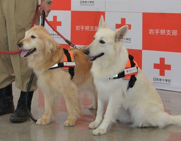 赤十字マークを贈られた、ゆき(左)とさち