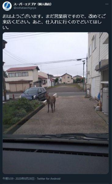 青森県むつ市にある個人スーパー・エチゴヤのツイート