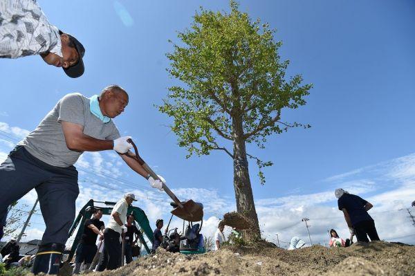 岩沼市の長谷釜集落にあった大木にちなみ、移転先の公園に住民たちがイチョウを植えた=岩沼市玉浦西、2014年8月31日