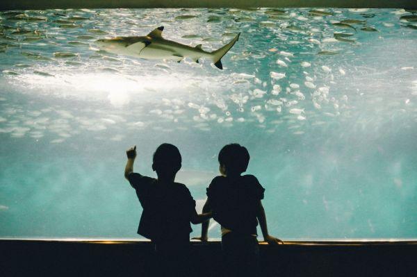 水族館は大好きな撮影場所。双子の息子たちにしか 分からない会話をしているところ