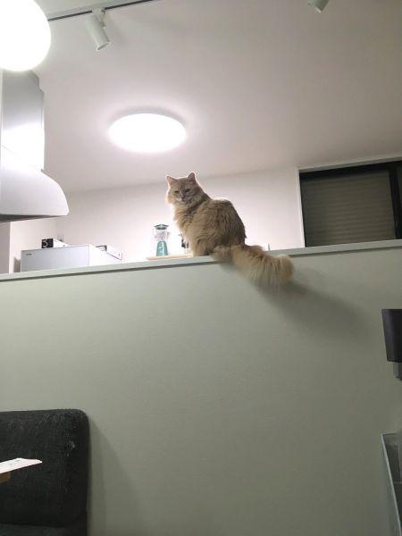 病気発症前のしるく。「今までは怒っていたキッチン登りも好きなだけOK。とにかく元気になるよう祈ります」(leizさん)