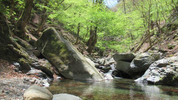 水道水源林