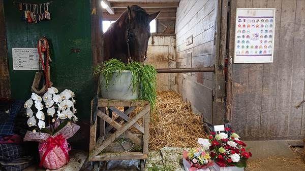 ナイスネイチャ、33歳の誕生日にはたくさんのにんじんや青草、花が届いた