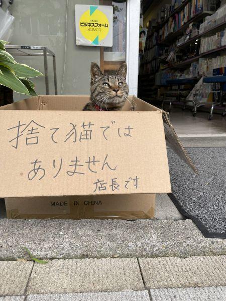 万年道文具店の軒先に置かれた段ボール箱に入り、顔を出す「店長」猫・シマ子