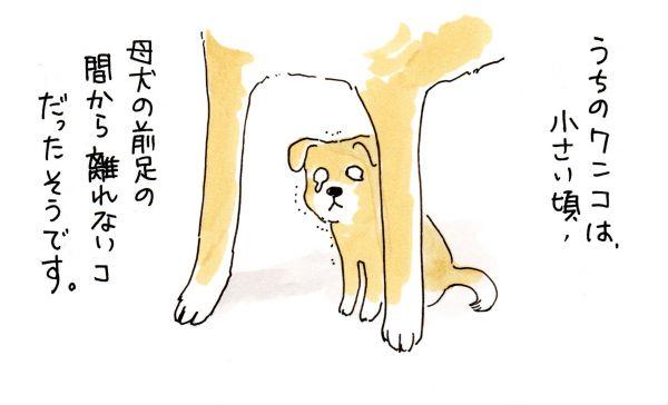 老犬との暮らしを描いた漫画