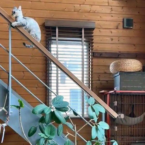 階段の手すりにつかまる生後4カ月の子猫「よつば」