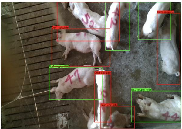 監視カメラやセンサーを用いた豚の個体把握