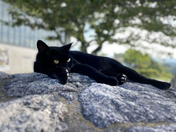 石の上で寝っ転がるケンちゃん