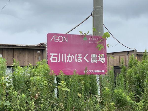 イオンアグリ創造の石川かほく農場。「キャベツや白菜、水菜、ホウレン草などを作付けしているようです」(イオえもんさん)