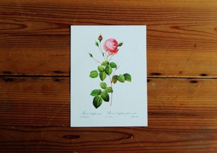 antiques 薔薇のカード(Pierre-Joseph Redoute)①
