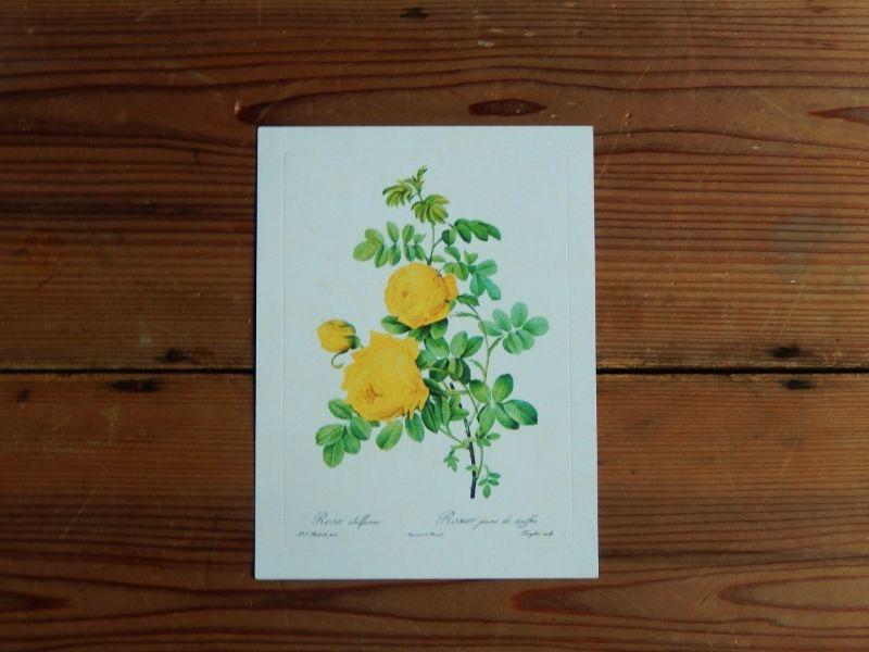 antiques 薔薇のカード(Pierre-Joseph Redoute)④