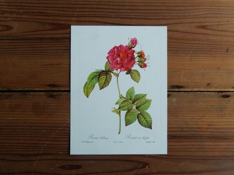 antiques 薔薇のカード(Pierre-Joseph Redoute)②