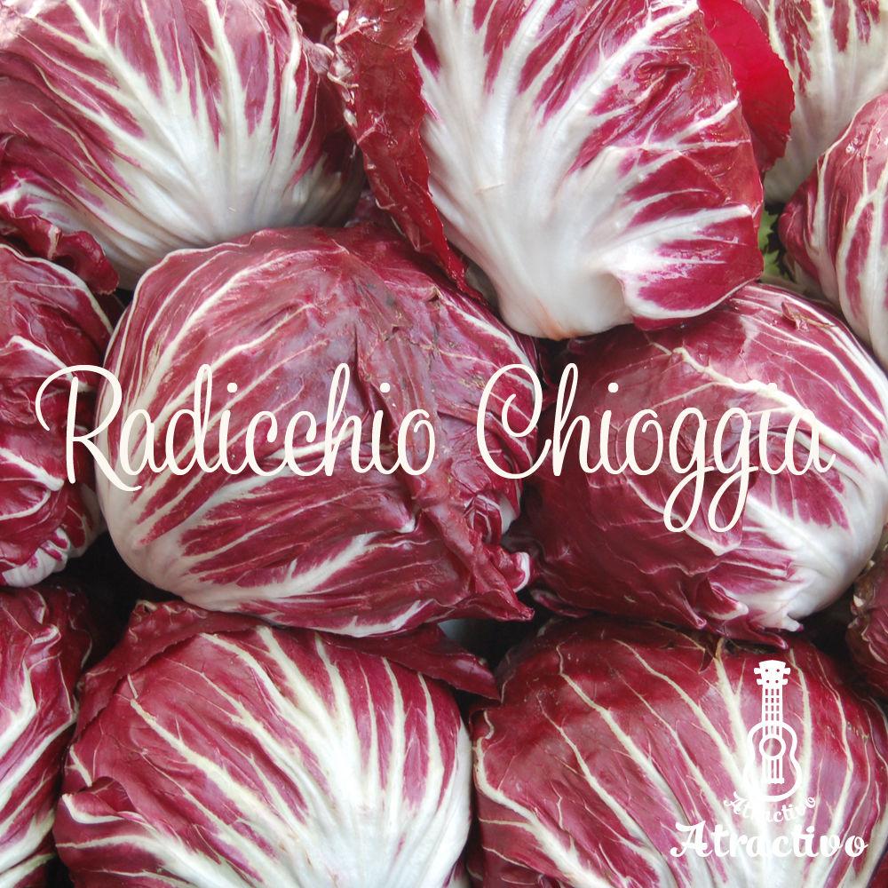 イタリア冬野菜ラディッキオ・キオッジャの種