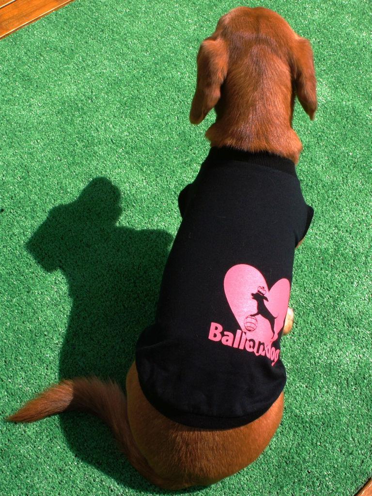 【在庫処分セール】Ballondog ロゴ dogwear