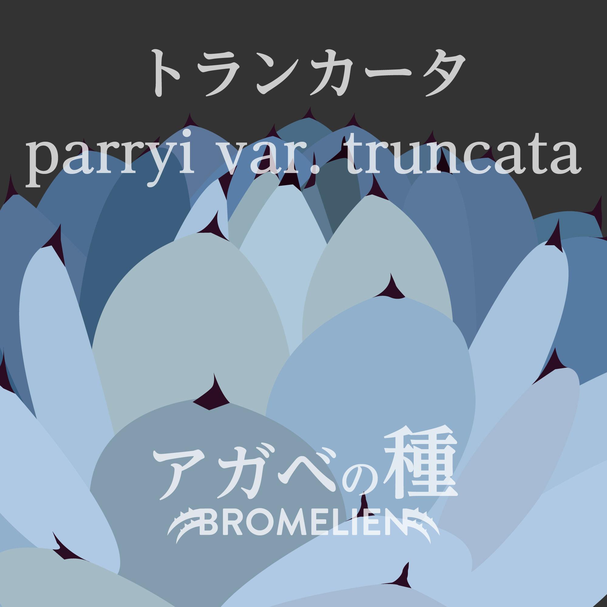 アガベの種 parryi var. truncataトランカータ 20個