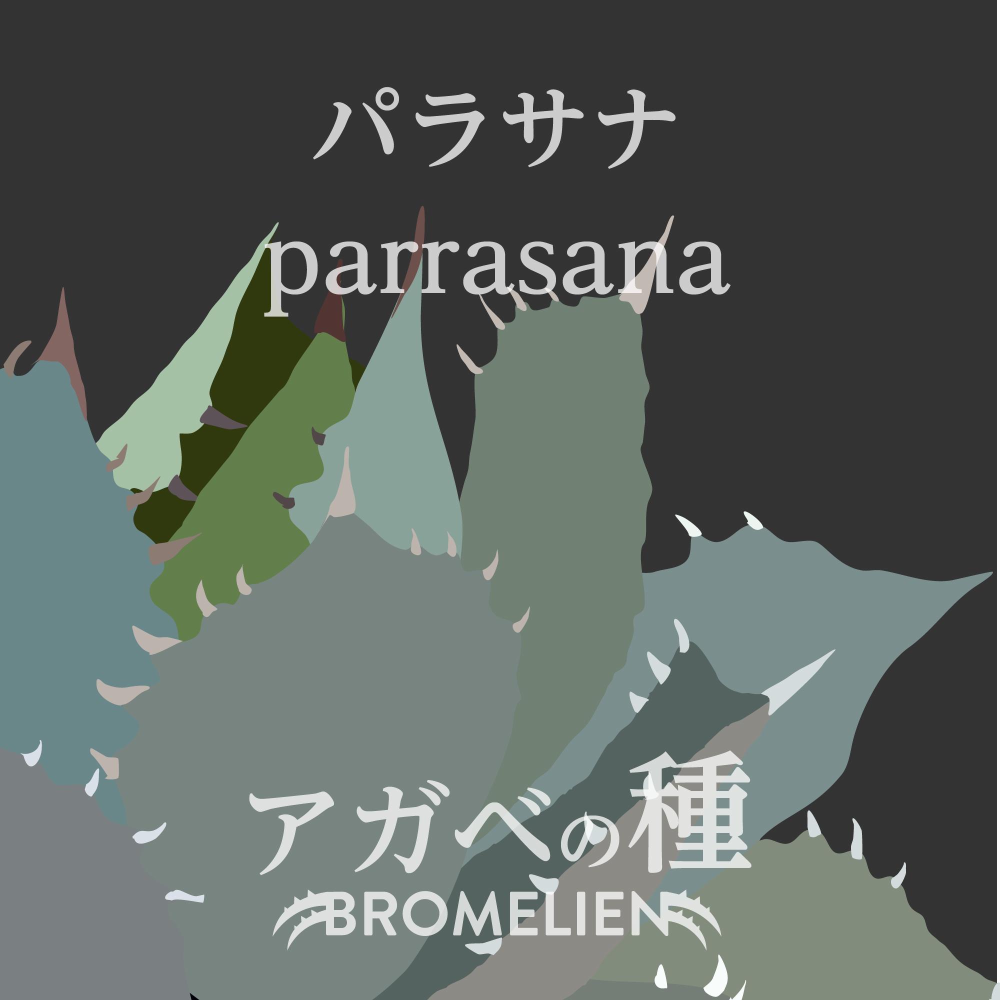 アガベの種 parrasana パラサナ 20個