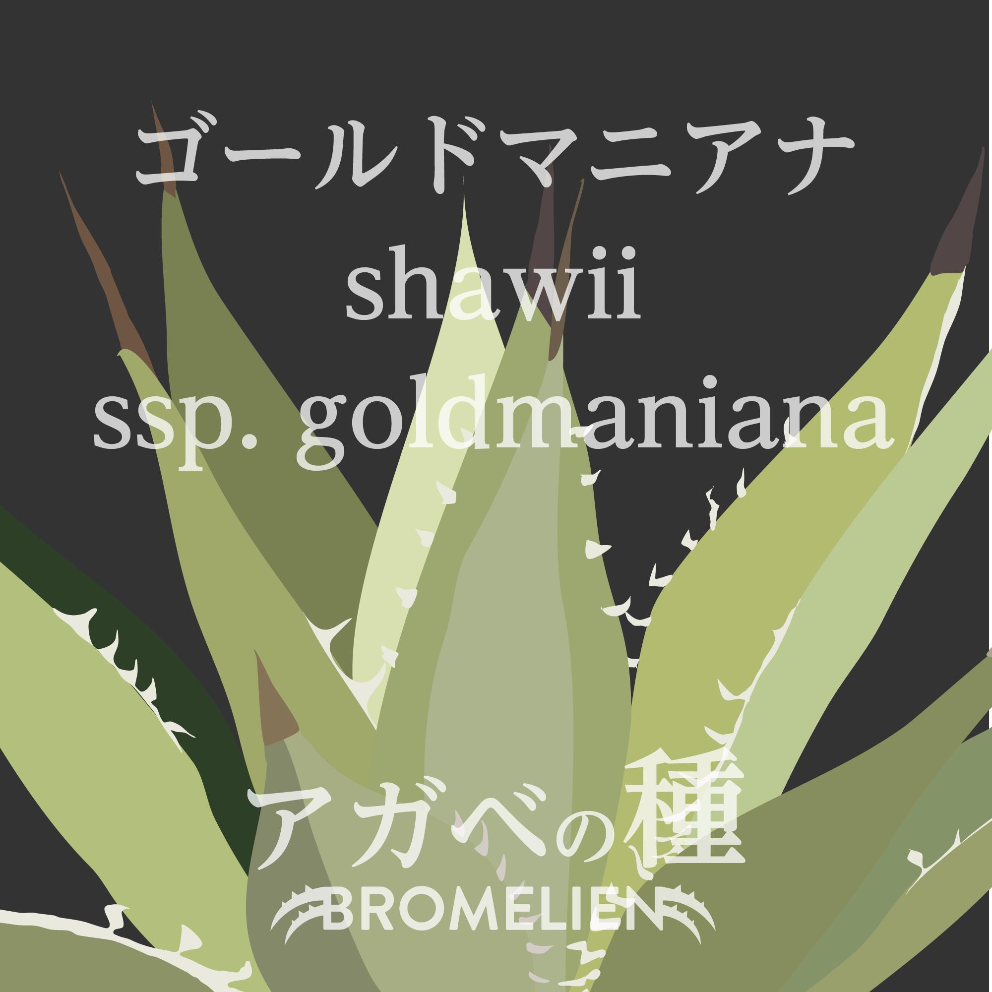アガベの種 shawii ssp. goldmaniana ゴールドマニアナ 20個