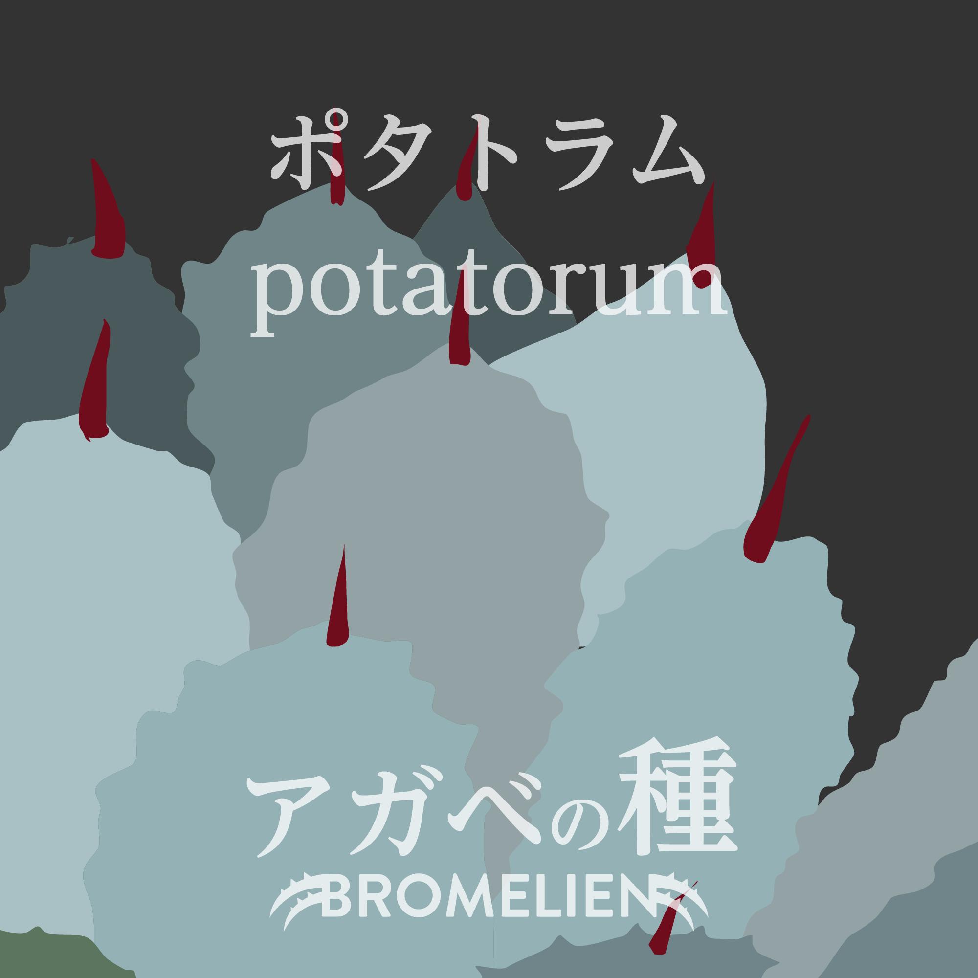 アガベの種 potatorum ポタトラム 20個