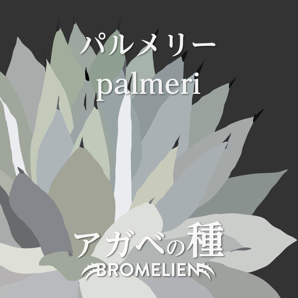 アガベ種子 パルメリー palmeri 20個