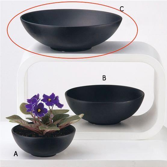 モンスターサイズの亀甲竜や多肉植物の寄せ植えに! Compote Bowl 穴なし Lサイズ