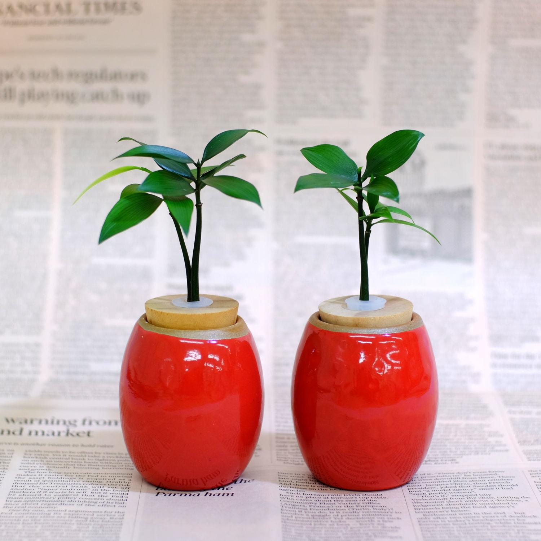 土なし 清潔 水やり簡単 良縁を結ぶ梛(ナギ)の木と 陶房「うさぎ庵」特製陶器鉢 2個セット