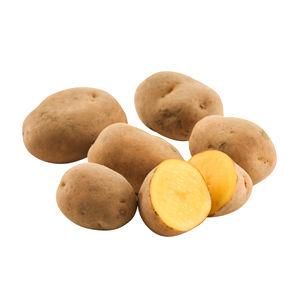 【特別栽培】 インカのめざめ Sサイズ 10kg