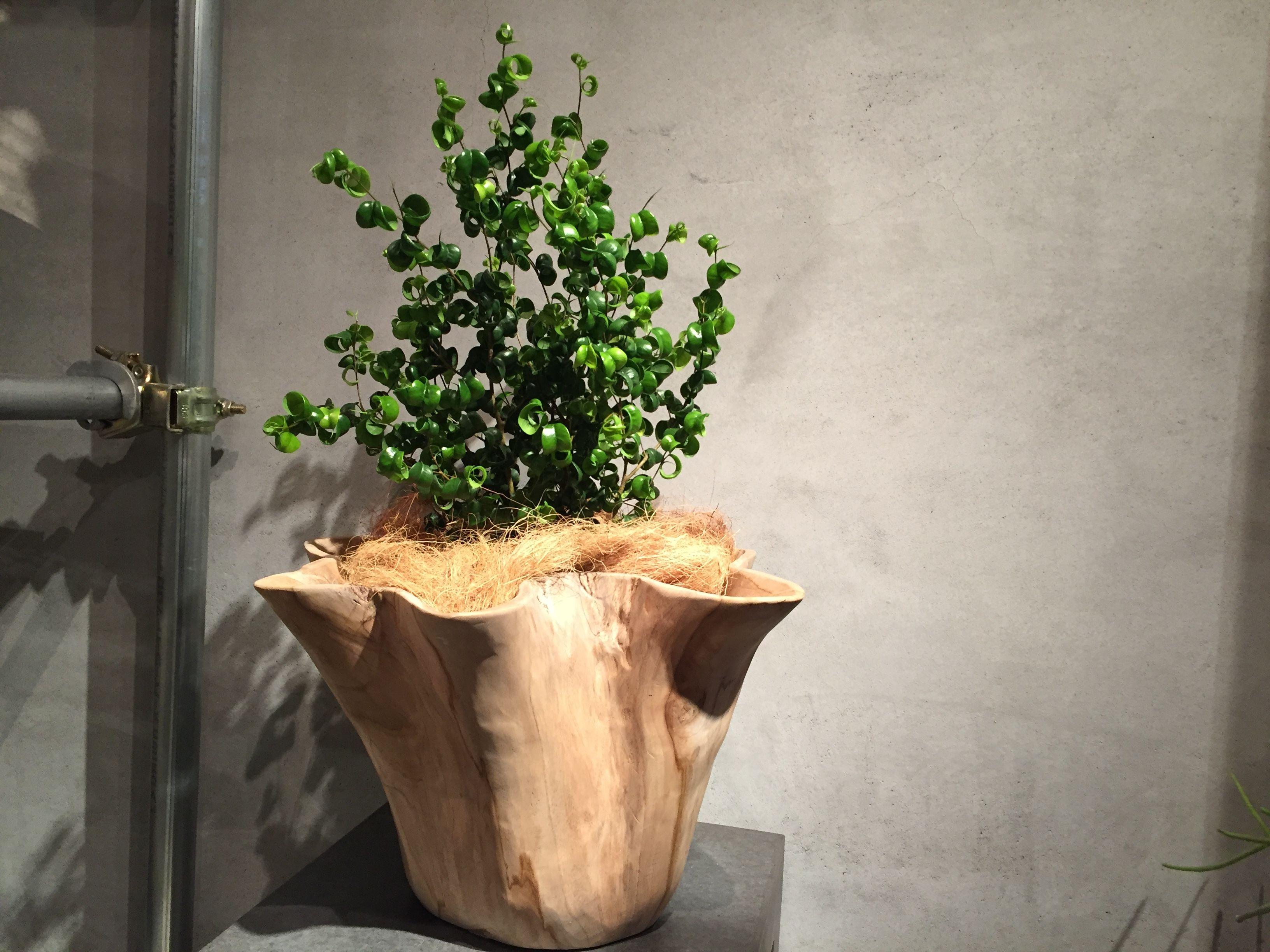 Barok  ×  wood cover