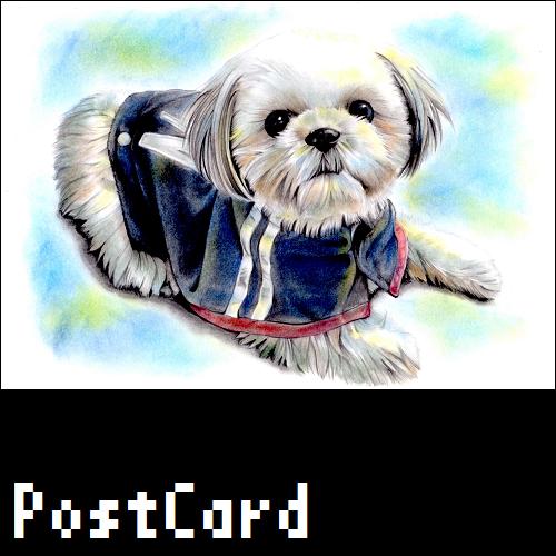 ポストカード【シーズー】