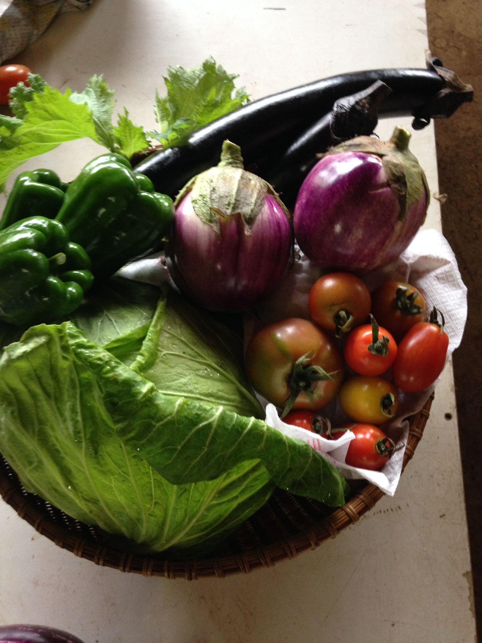 旬の有機JASお試し野菜セット8品目 送料込み