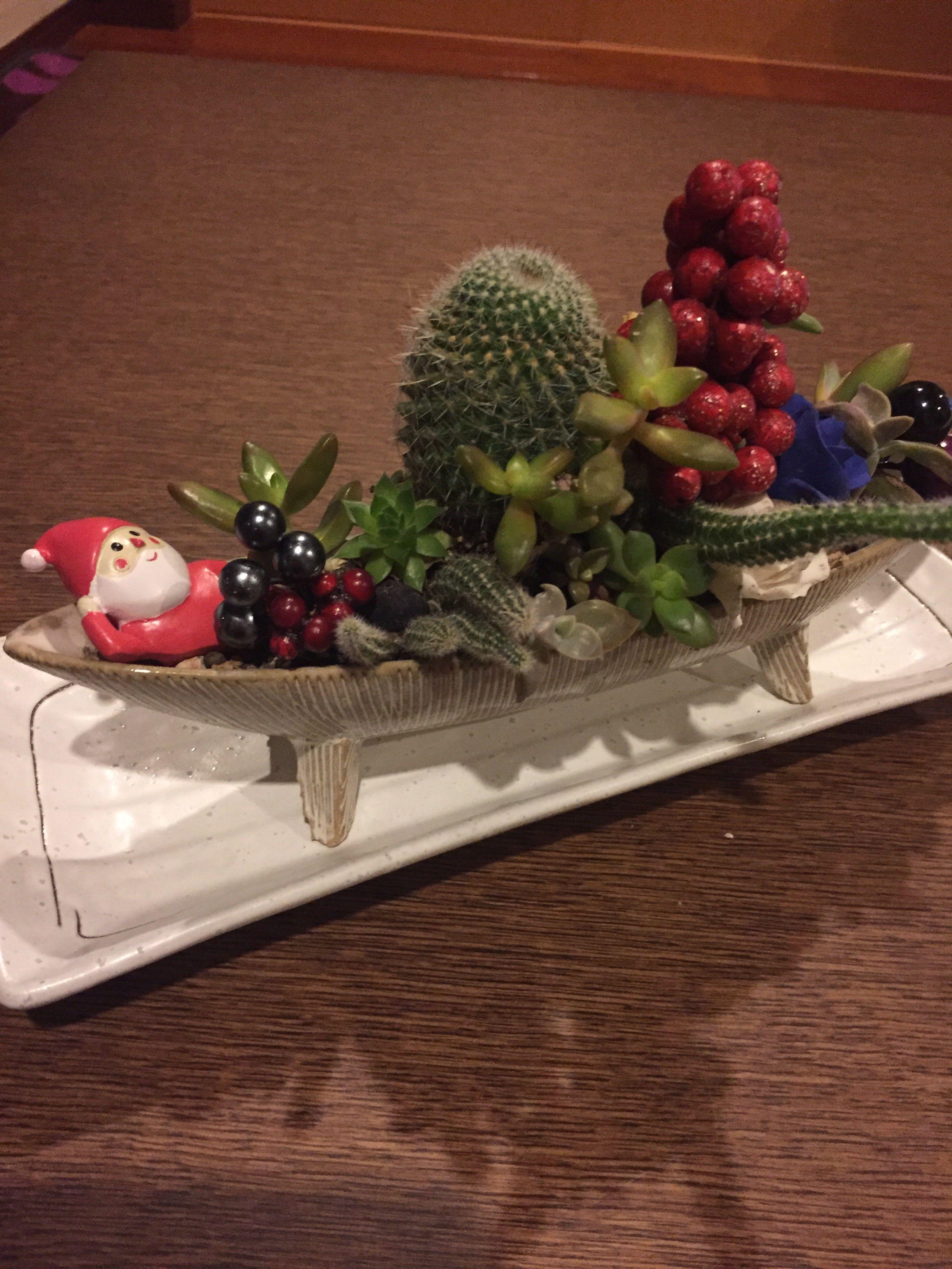 サボテンと多肉の寄せ植え☆クリスマスバージョン?