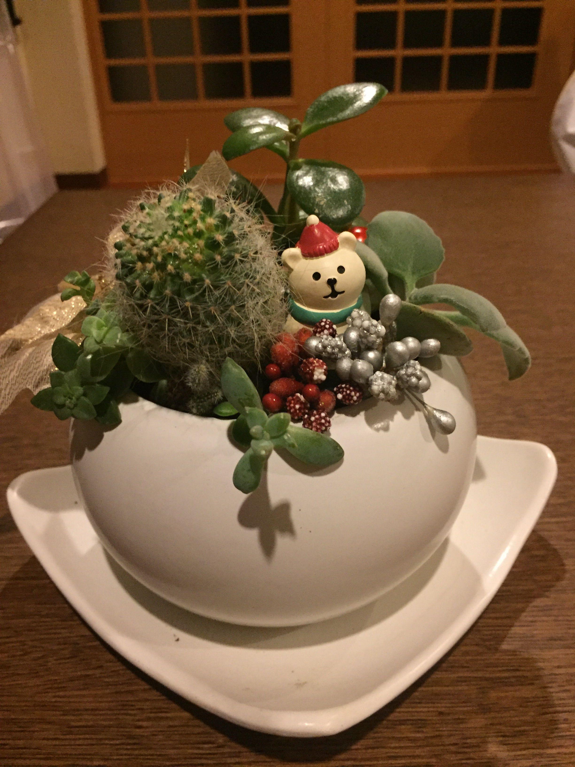 サボテンと多肉の寄せ植え?クリスマスバージョン☆