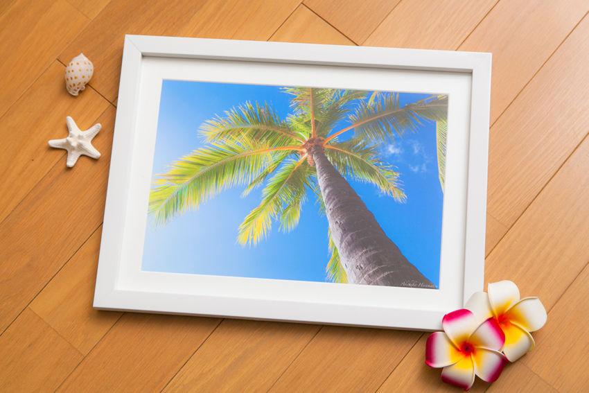 【プリントのみ】Palm tree