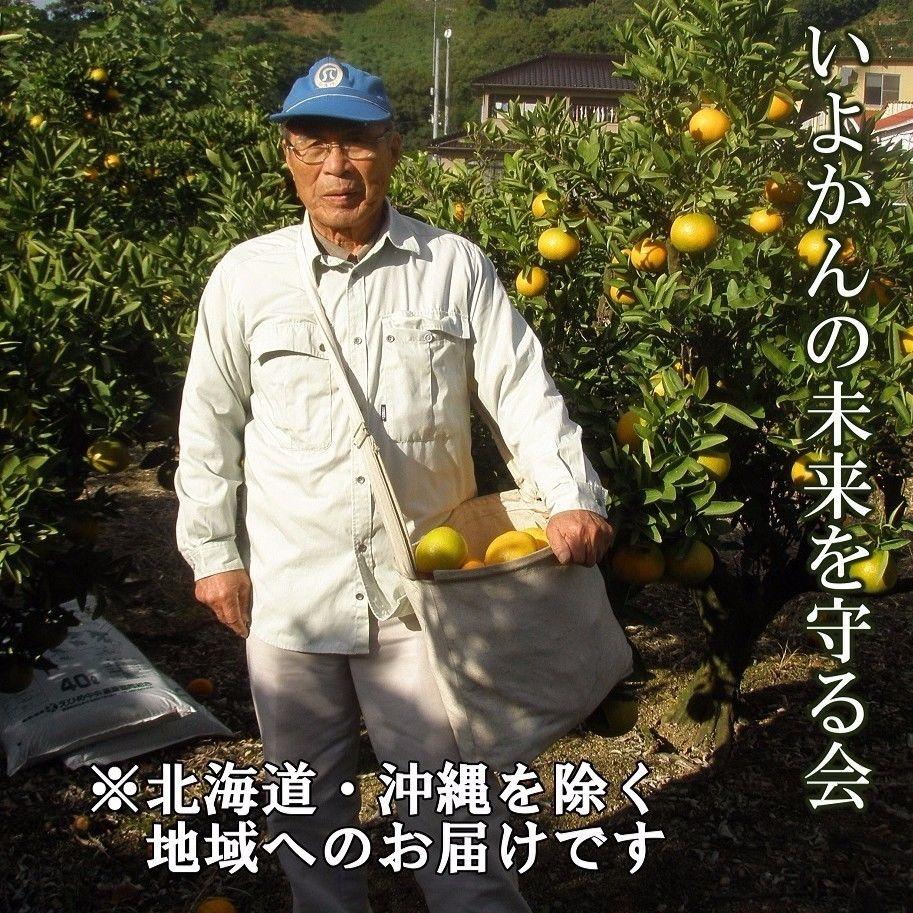 いよかんの未来を守る会(頒布会)(北海道・沖縄を除く地域へお届け専用)