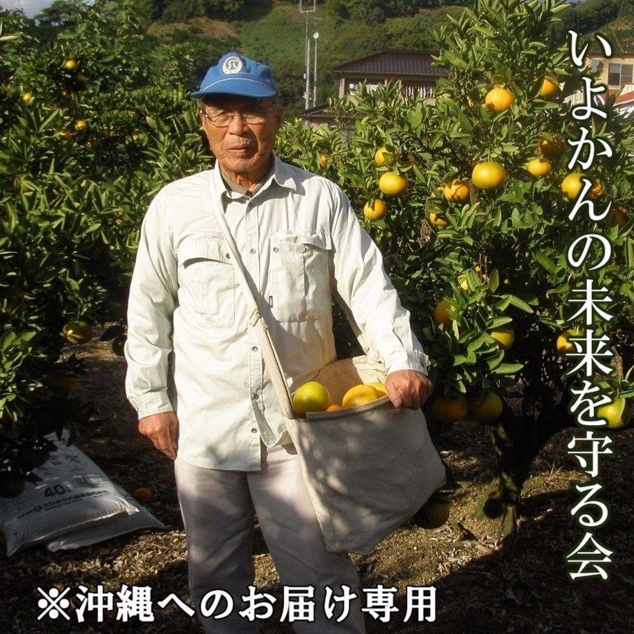 いよかんの未来を守る会(頒布会)(沖縄へのお届け専用)