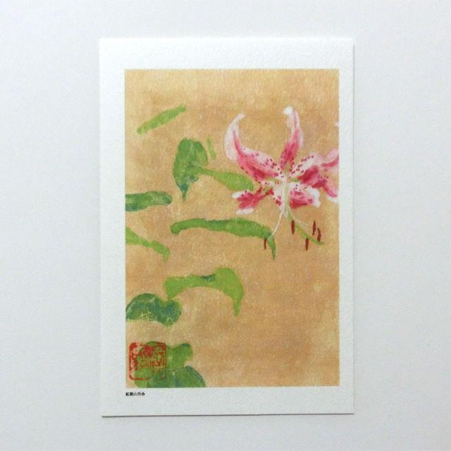 日本画 ポストカード 【紅筋山百合】