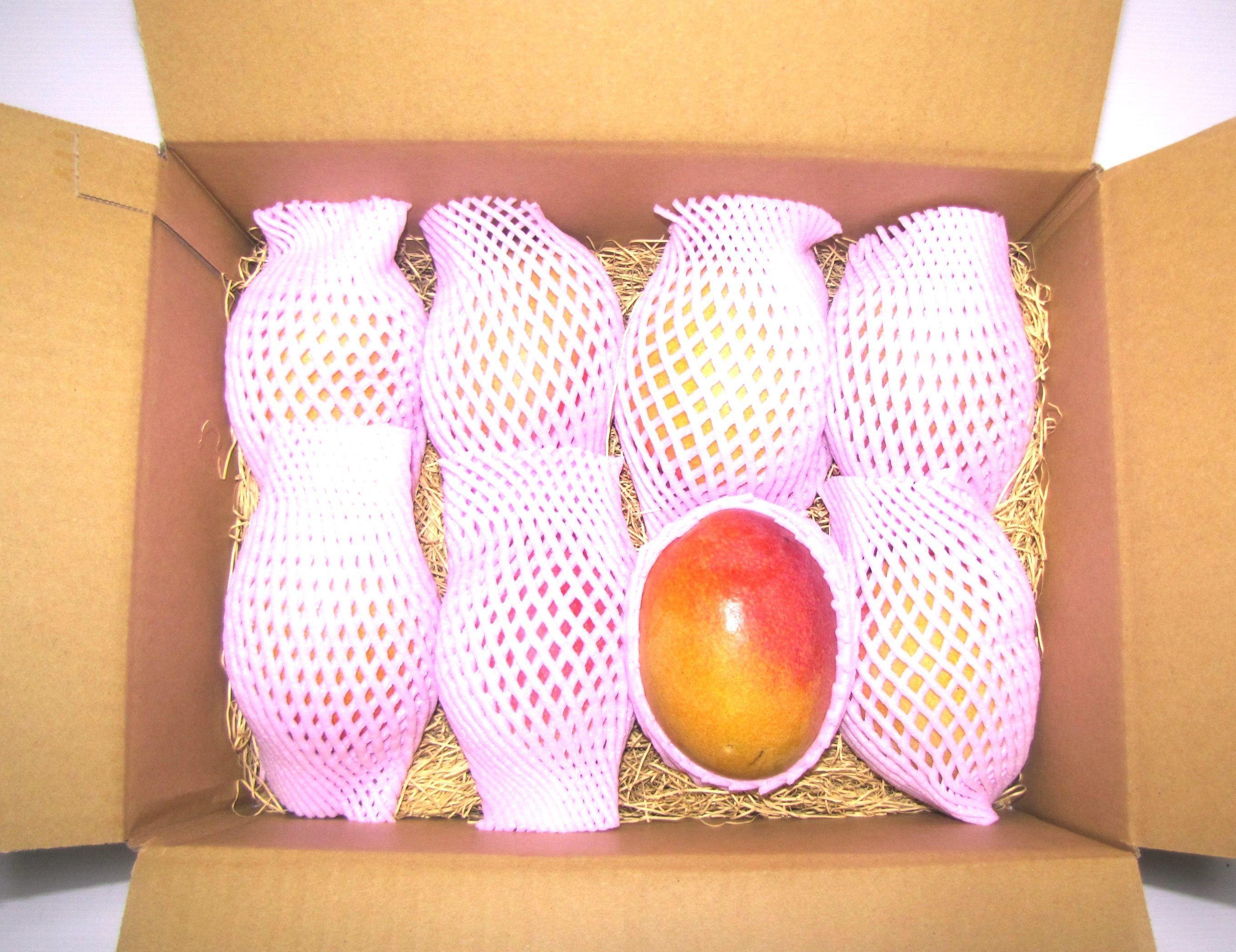マンゴー 3.3kg  8玉~10玉
