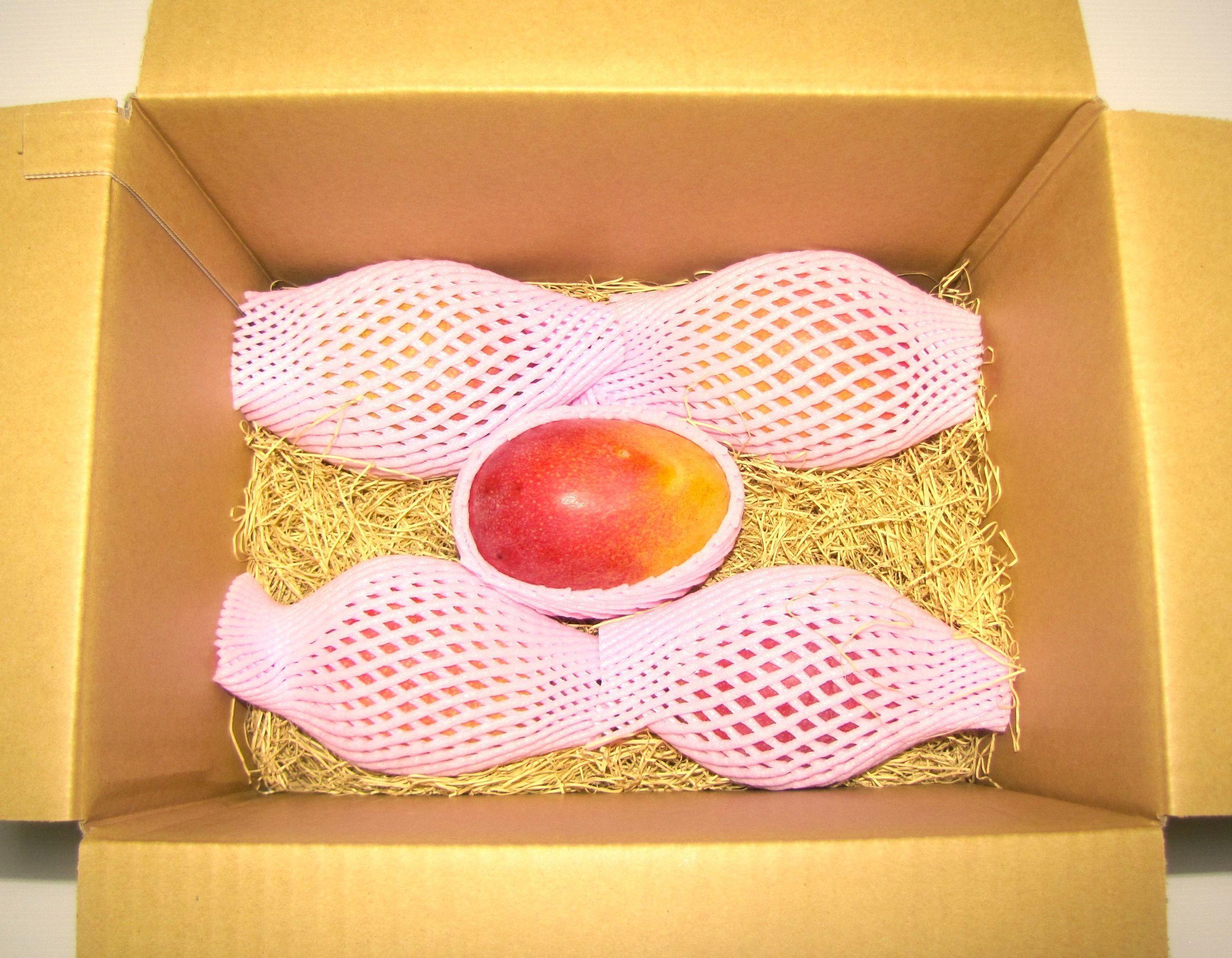 マンゴー 2.5kg  5玉~7玉