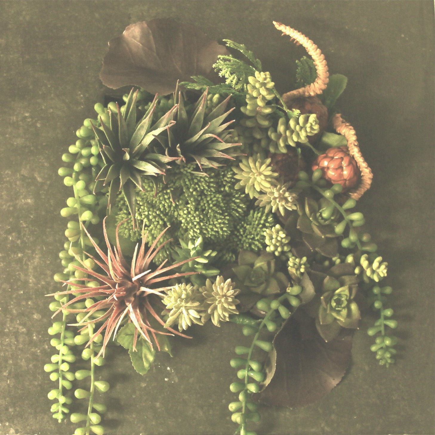 Art  Design  アート多肉植物デザイン
