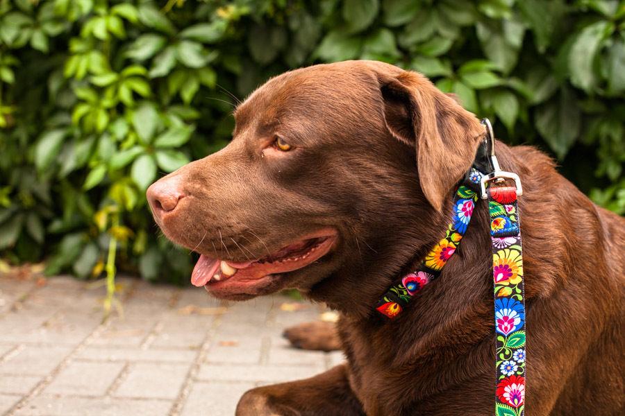 犬用首輪・リードセット(L)ブラック