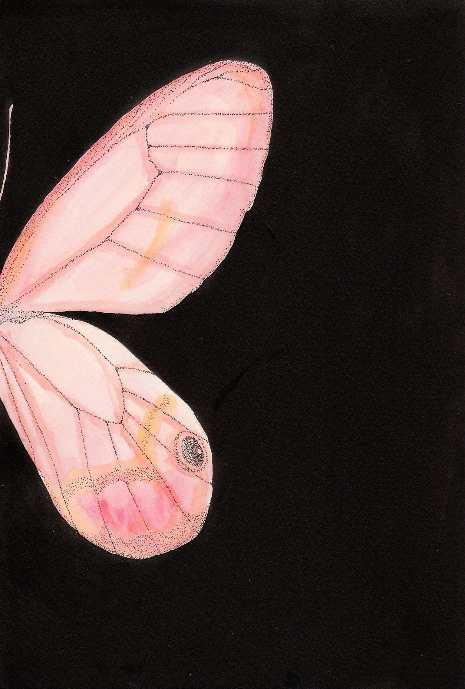 ポストカードパネル(エレバベニスカシジャノメ)