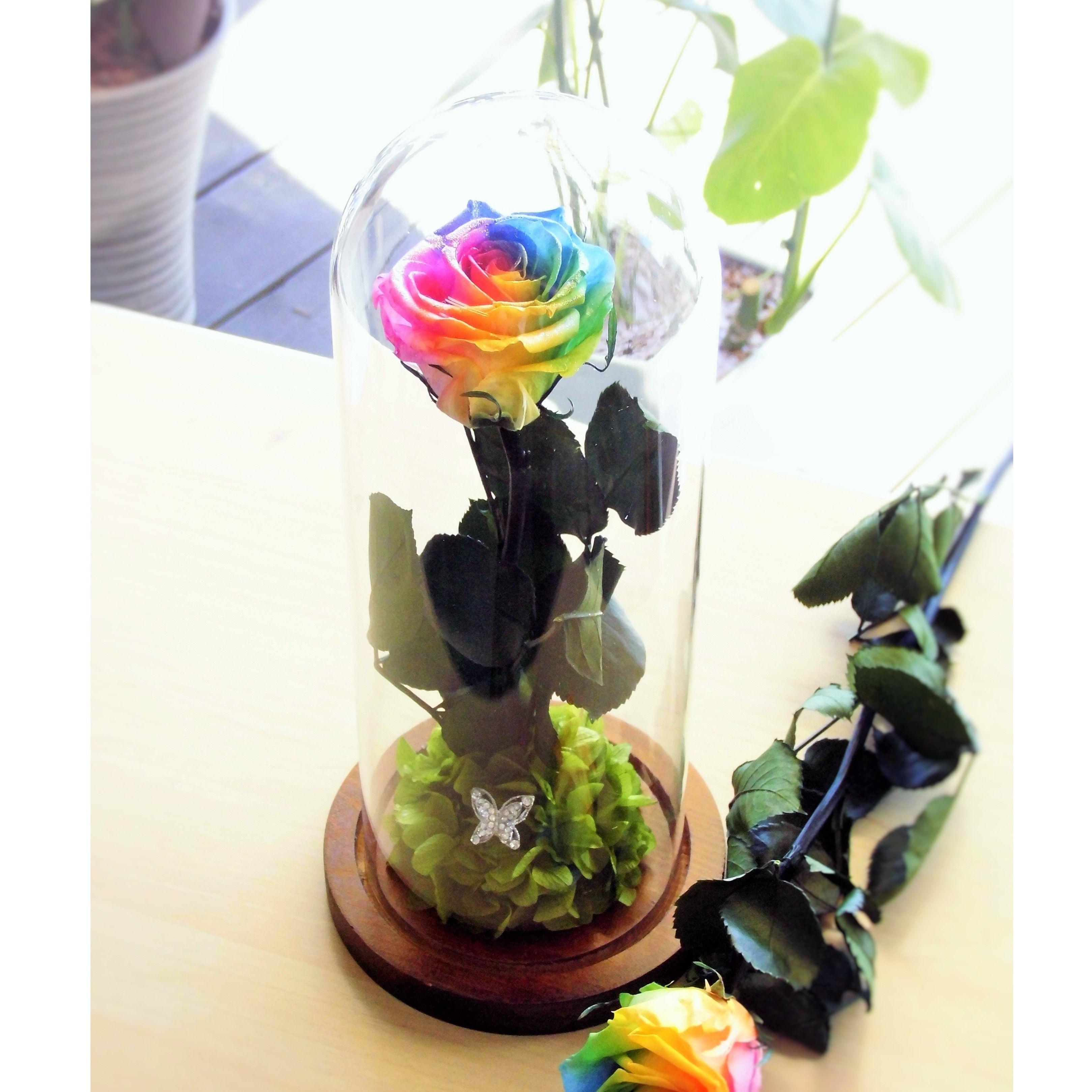 プリザーブドフラワー レインボーローズ ''Rainbow Dome'' ガラスドーム レインボーローズ茎までプリザーブドフラワー
