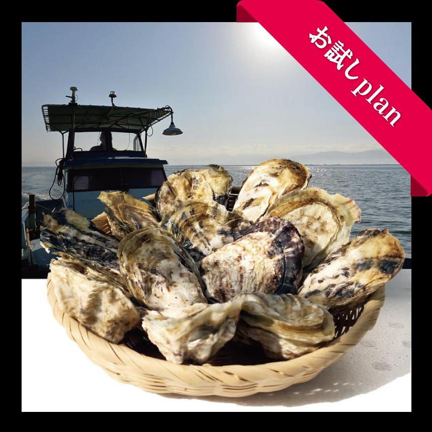 男気牡蠣(殻付き生食用)ロープ1本分 お試しオーナープラン 限定50口