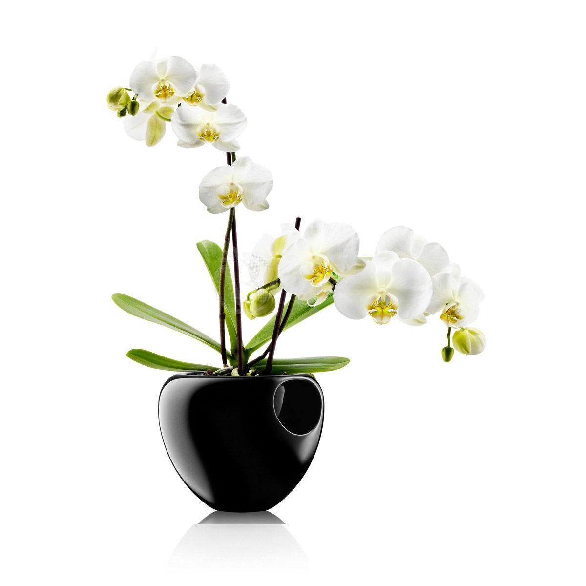 eva solo orchidpot BLACK
