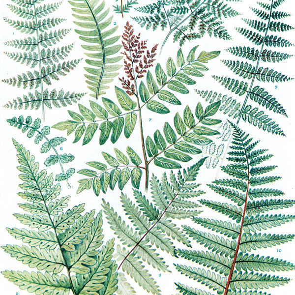マルチクロス/Leaves/L:140×240cm