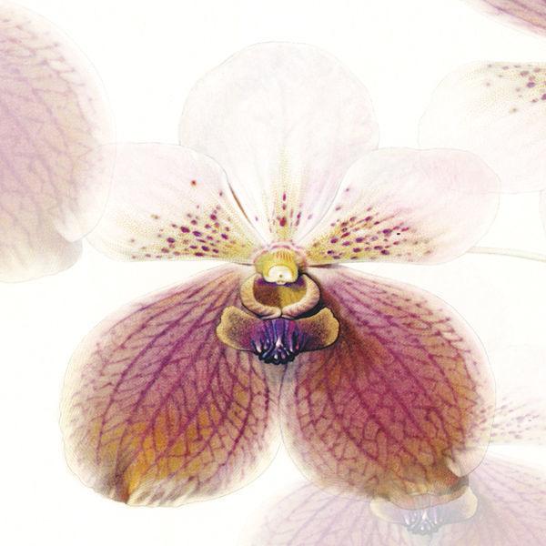 ストール&マルチクロス/Orchid/S:120×120cm