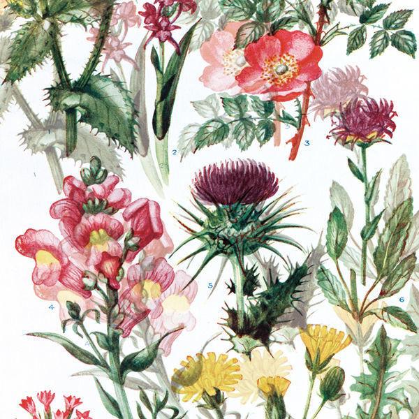 ストール&マルチクロス/Flowers/S:120×120cm