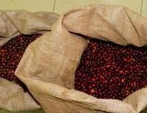 ブラジル パダップ農園 手摘み完熟豆  中深煎り 200g