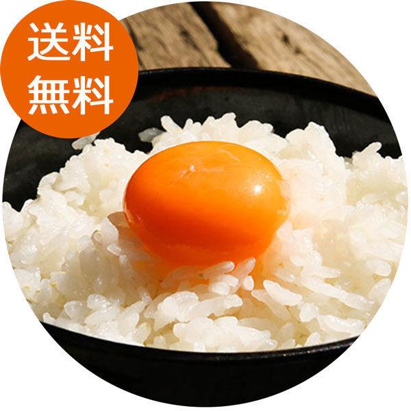 【土佐ひかり】12パック(72玉)