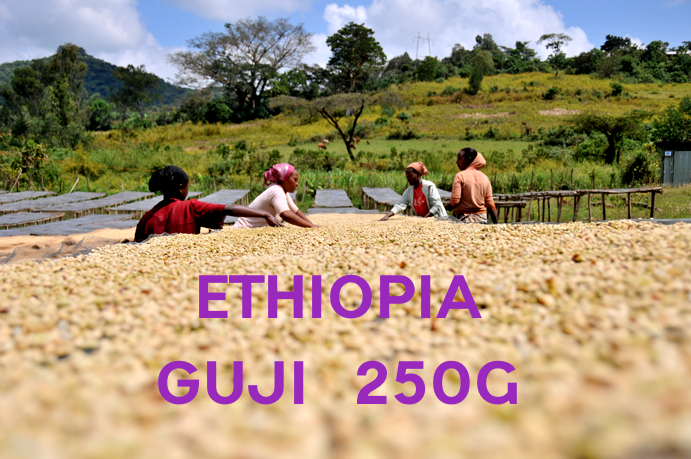 【SPECIALTY COFFEE】250g Ethiopia Sidamo Guji G1 1,750-2,300m Fully Washed / エチオピア シダモ グジ G1 フリーウォッシュト